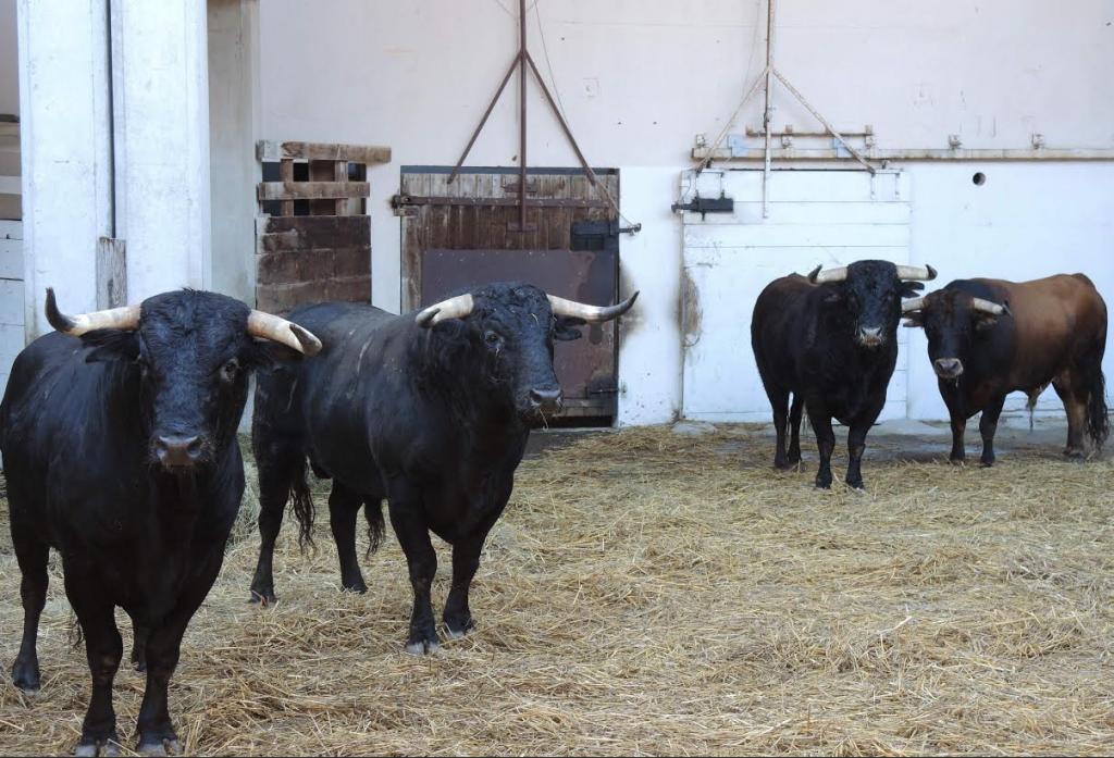 Quatre des novillos de « Toros de la Plata ». Photo JMD.