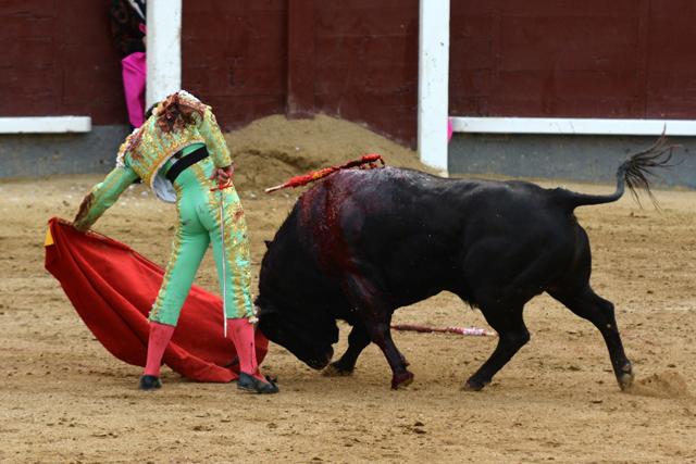 David Mora Alcurrucen Madrid 24052016 Photo © Ferdinand DE MARCHI