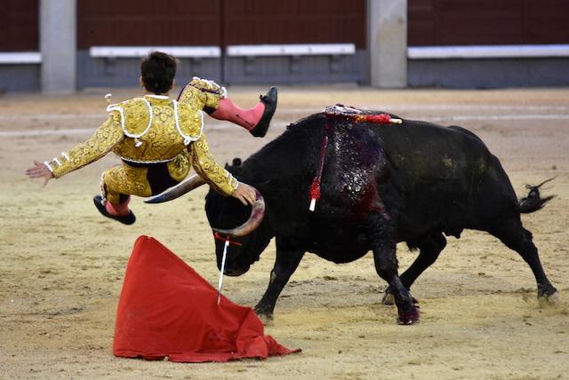 Ruben Pinar Toro Conde de la Maza Madrid 25092016 Photo © Ferdinand DE MARCHI
