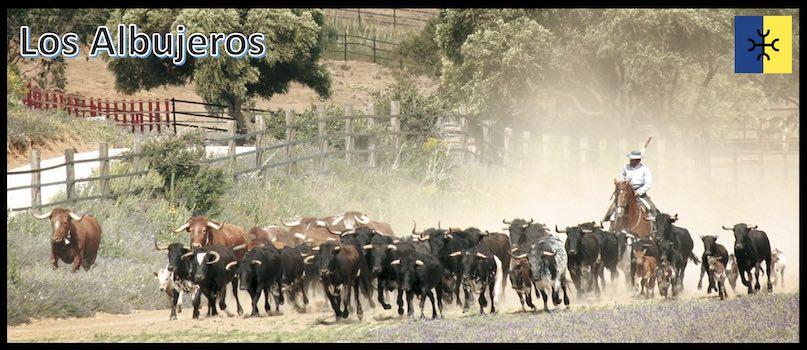 """La finca """"Los Albujeros"""", siège de la ganaderia Torrestrella, change de mains."""